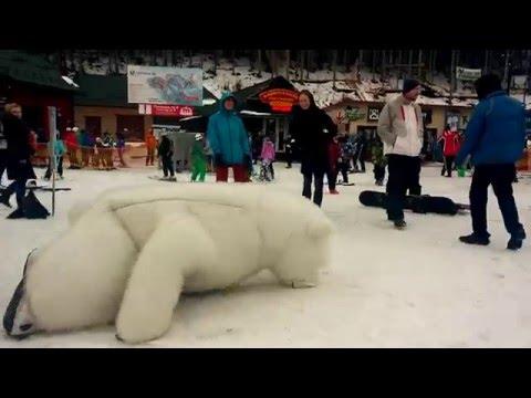 белый медведь видео атаковал