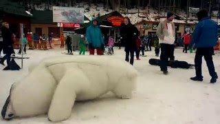 Приколы. Медведь нападает на туристов. Буковель(Огромный белый медведь гоняется за туристами))) Заказ медведя на любой праздник: 098 33 99 008 http://medved-umka.com.ua http://vk...., 2016-02-19T21:05:43.000Z)