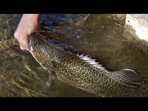 Trekking And Fishing For Murray Cod And Golden Perch