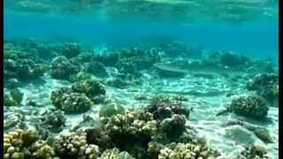 atoll des Tuamotu