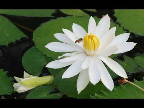 (黃慧音) Imee Ooi - Great Compassion Mantra