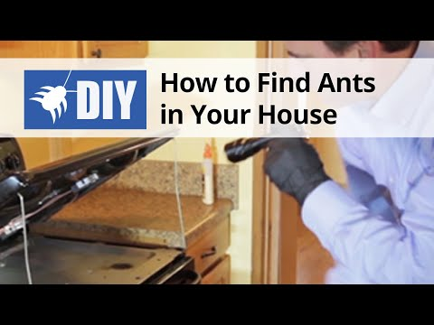 How to Find Ants in Your House