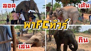 เมื่อ FC (เเฟนคลับ)มาเยี่ยมเดอะเเก้ง ความมันจึงบังเกิด  FUN #elephant #ช้าง thumbnail