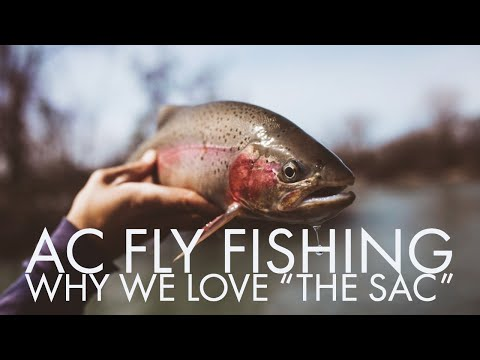 Lower Sacramento River Fly Fishing Guides- Why We Love