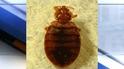 Bed bugs at Covington IRS force trainee to quit on second day, Forest Park mom says