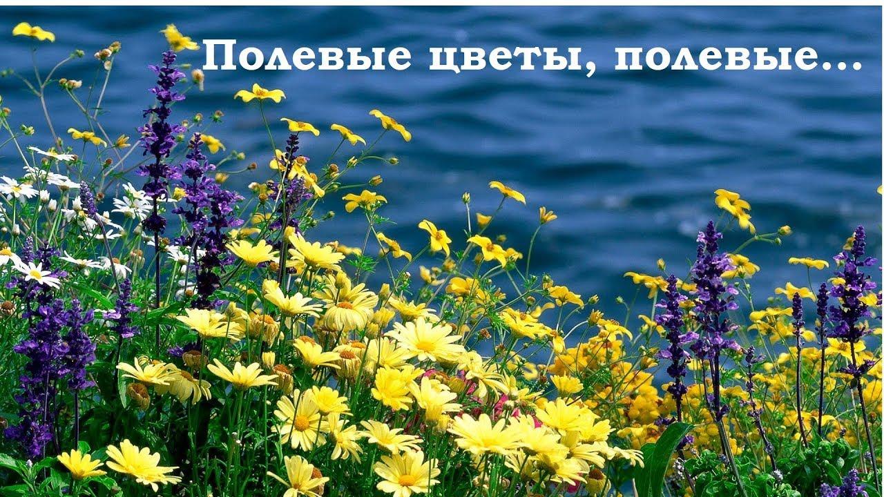 Я люблю вас цветы полевые. Позитив для друзей.