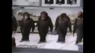 обезьяны танцуют кайфуем