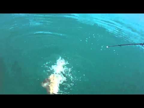 Черноморская рыбалка видео фото 90-702