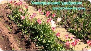 Универсальное удобрение для всех растений на даче.(Как и чем удобряю растения на даче. Самое доступное, простое и эффективное удобрение для растений, что..., 2016-05-30T07:24:52.000Z)