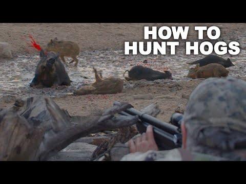 How to KILL HOGS like a MASTER | Hog Hunting 101