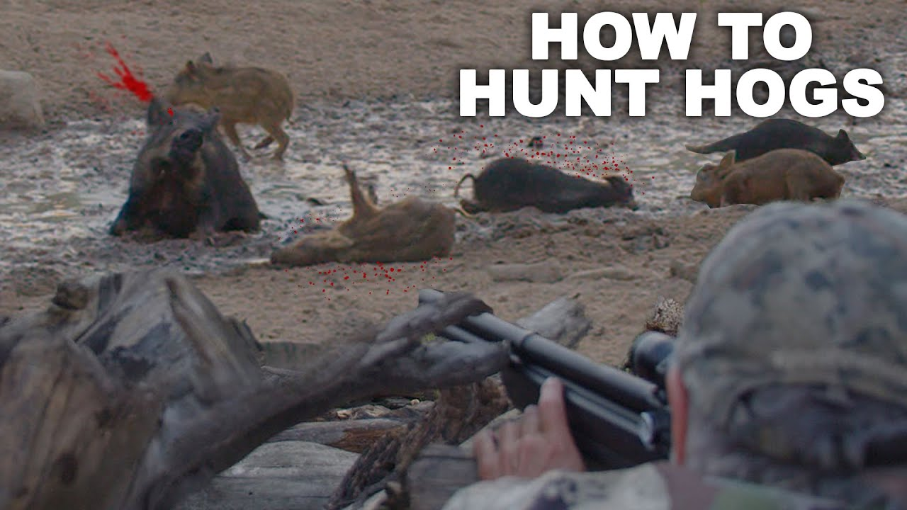 Download How to KILL HOGS like a MASTER | Hog Hunting 101