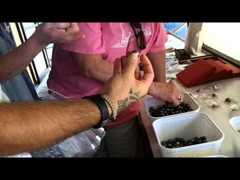 Buying Black Pearls in Tahiti