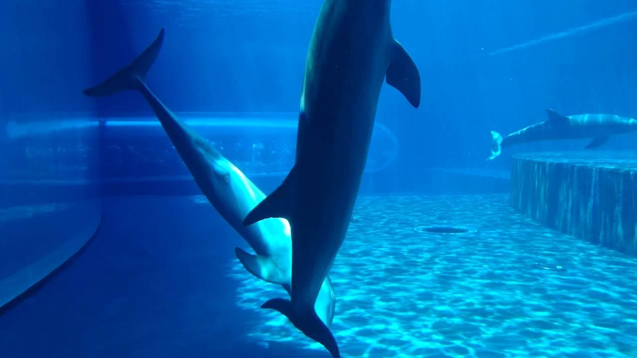 sesso con video delfino