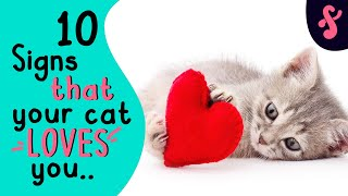 ❤ 10 Signs That Your Cat Really LOVES You | Furry Feline Facts