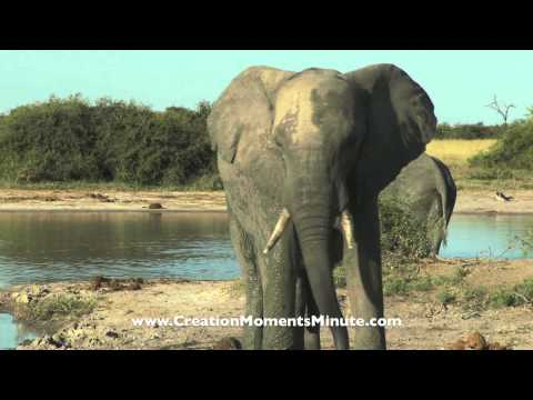 Air-Cooled Elephants   Creation Moments Minute