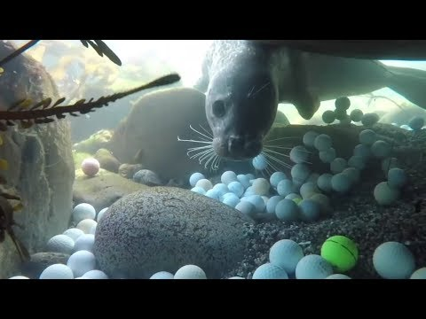 Thousands of golf balls found off California Coast