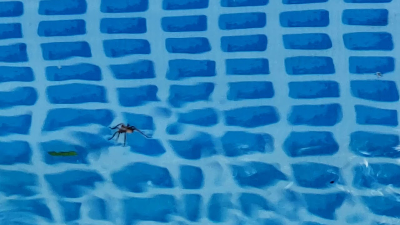 Distance swim, 11km and then a big spider