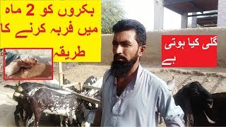 Goat Farming|How to start Goat farming|small Business Ideas