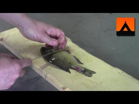 How To Fillet A Bluegill Or Sunfish