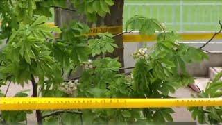 Chute d'un arbre dans la cour d'une école : que s'est-il passé ?