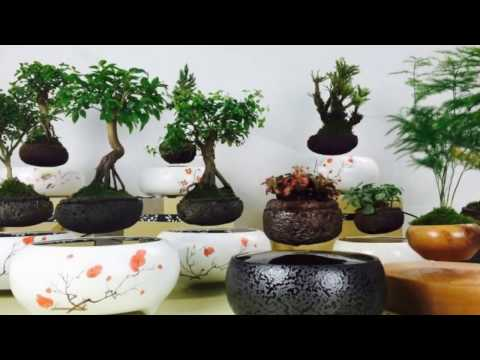 Bonsai Tools And Equipment - Visit Bonsai World