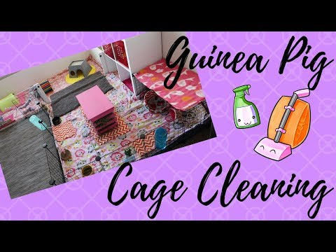 Guinea Pig Cage Clean | DIY Cage with Fleece Bedding
