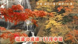 「磯山さやかの旬刊!いばらき」では、磯山さやかさんが紅葉の見頃を迎...