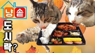 고양이에게 도시락을 준다면? & 가을타는 길냥이 ㅋ