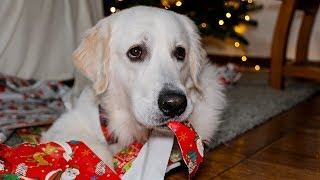 Santa's Gifts: Funny Dog Bailey