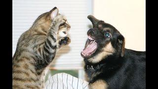 🐈 Враг или друг? Ответный удар 🐈 Подборка смешных кошек и  собак для хорошего настроения! 😸