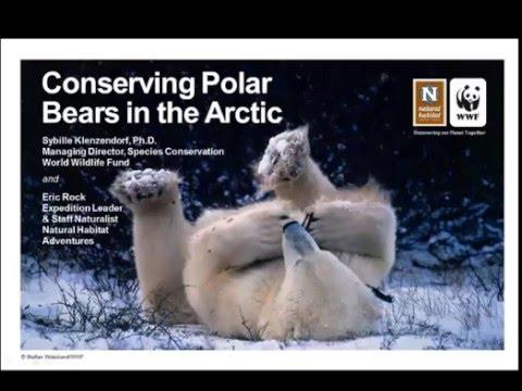 WEBINAR | Conserving Polar Bears in the Arctic