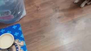видео Ягненок с рисом