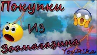 ЗооТовары /Фея или Бэкки Беременны(, 2017-01-23T19:40:00.000Z)