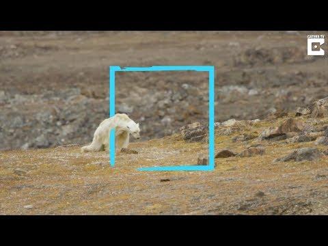 Is deze beer wel slachtoffer van klimaatverandering? #kloptditwel - de Volkskrant
