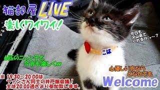 猫部屋live楽しくワイワイ # 71 「6匹の猫と今宵も楽しく」=^_^=