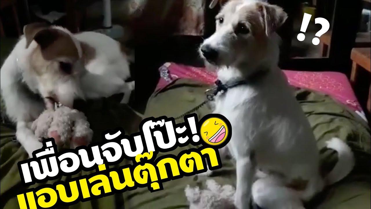 หมาแอบเล่นตุ๊กตา  หัวเราะ ฮา หนักมาก #ดูกี่ทีก็ขำกลิ้ง