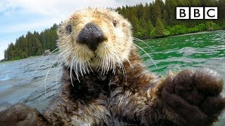 Cute_otters_intimately_filmed_by_spy_camera_-_Spy_in_the_Wild:_Episode_2_Preview_-_BBC_One