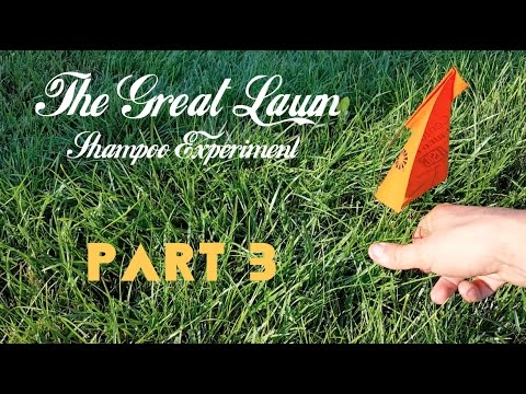 The Great Lawn Shampoo Experiment - Part 3