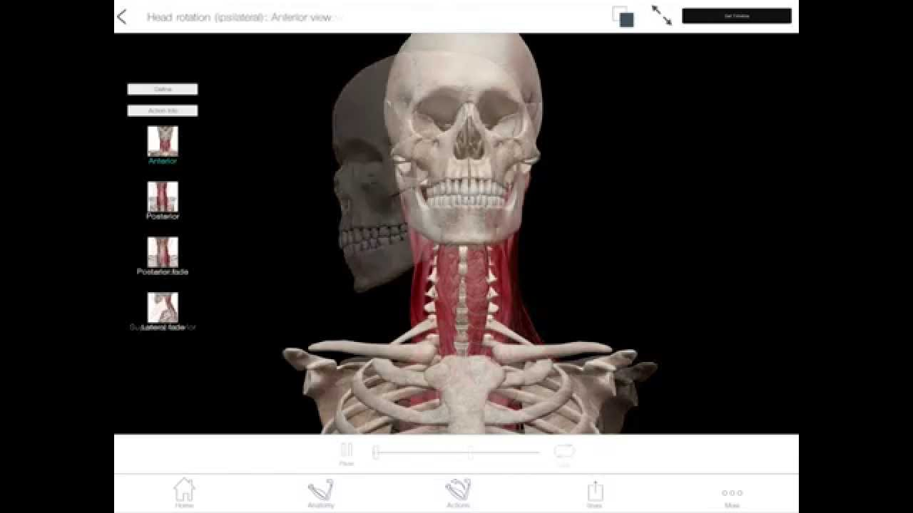 Learnvisible Body Head Rotation Contralateral Youtube