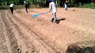 Repeat youtube video การทำแปลงปลูก ที่ถูกวิธีตามก่อนนำผักลปลูก ตอนที่ 1