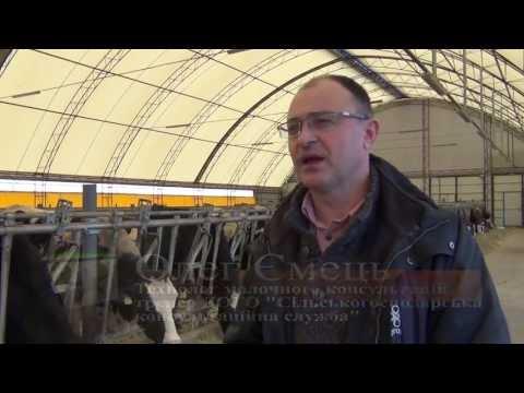 Міні-ферми сімейного типу в Україні