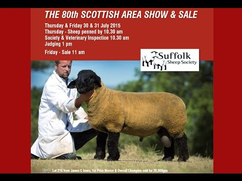 Suffolk Ram Lamb Stirling Sale (top 16 prices) July31st 2015