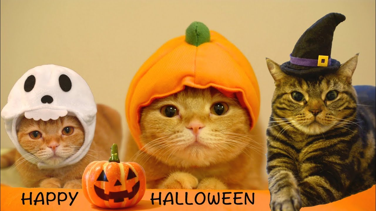 Happy Halloween! 9 cats. - YouTube