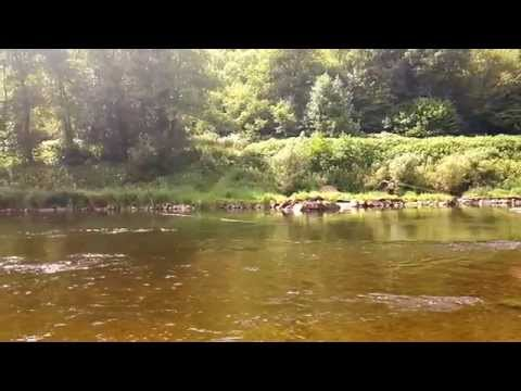 Salmon fishing river wye