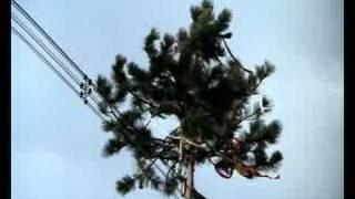 Отпуск за свой счет (майское дерево)