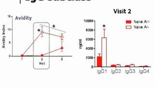 The Immunology of Oil-in-Water Adjuvants for Influenza Vaccines