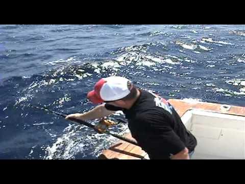Tuna fishing guadalupe island plus great white sharks for Guadalupe island fishing