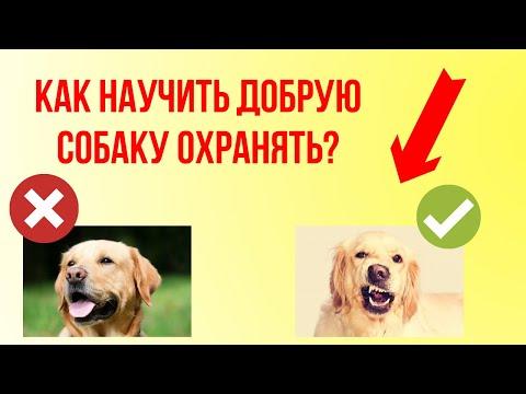 Как научить добрую собаку охранять и быть злой к незнакомцам? Можно ли озлобить собаку?