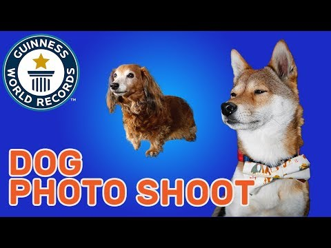 Largest Dog Photo Shoot – Guinness World Records