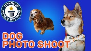 Largest Dog Photo Shoot - Guinness World Records